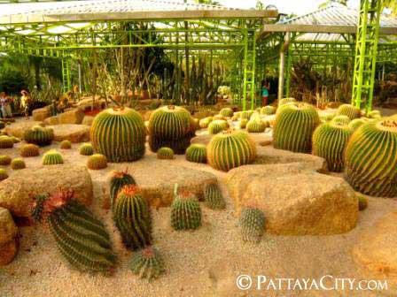 pattaya_city_nongnooch (59).jpg