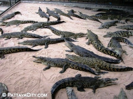 Crocodile Farm 15