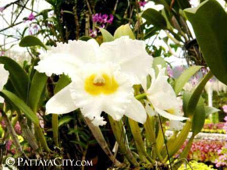 pattaya_city_nongnooch (7).jpg