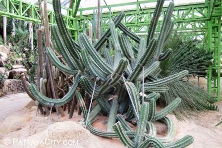 Nong Nooch Tropical Garden 27