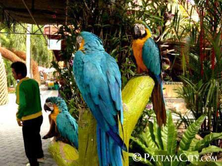 pattaya_city_nongnooch (8).jpg