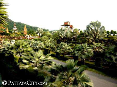 pattaya_city_nongnooch (47).jpg
